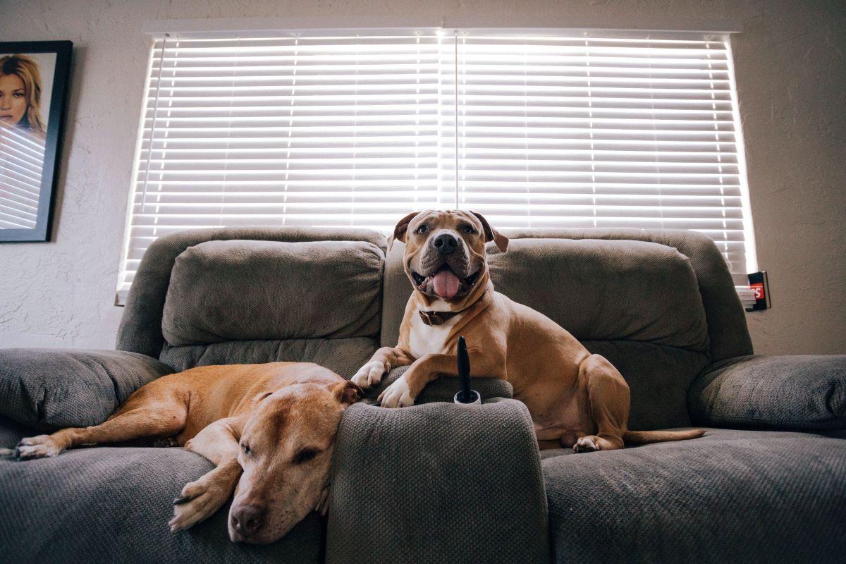 Hond laat alarm afgaan, wat kan ik doen